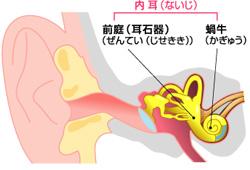 めまい 耳の構造 に対する画像結果